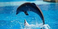 Newton's laws of motion describe the motion of the dolphin's path. This photo was taken at the Lisbon Zoo.