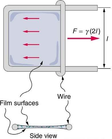 <b>Figure 11.28</b> Sliding wire device used for measuring surface tension; the device exerts a force to reduce the film's surface area. The force needed to hold the wire in place is F = γL = γ(2l) , since there are two liquid surfaces attached to the wire. This force remains nearly constant as the film is stretched, until the film approaches its breaking point.